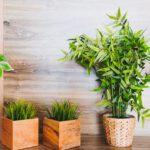Maxifleur kunst hangplanten